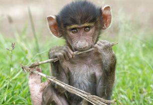 Exposition «Regards de primates»