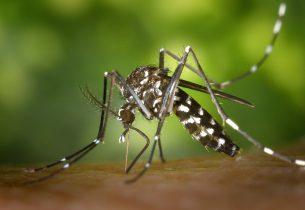Moustiques tigres, les bons gestes à adopter